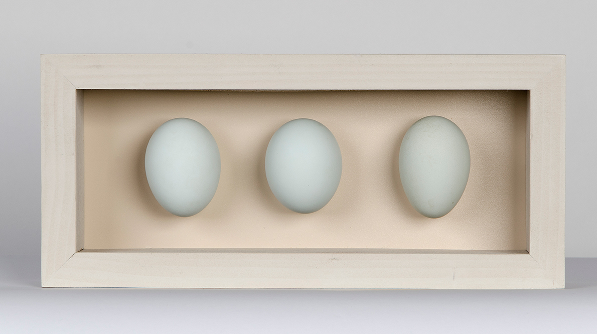 3 duck egg box