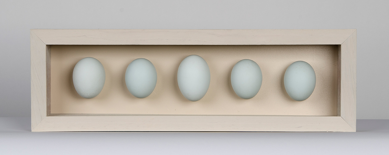 5 duck egg box