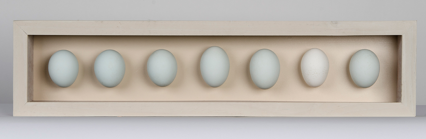 7 duck egg box