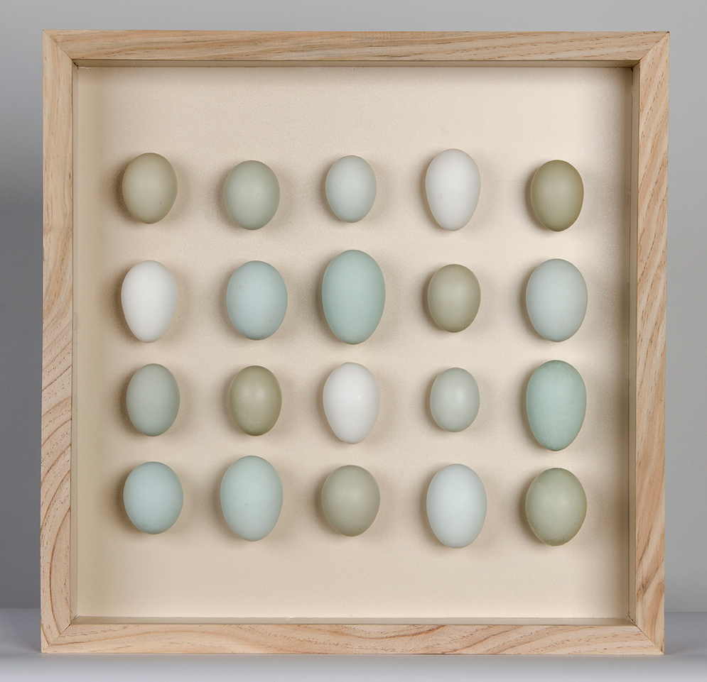 20 duck egg box